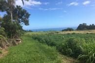 Hamakua Acreage with Mountain & Ocean Views!